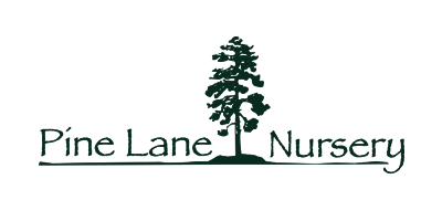 Pine Lane Nursery