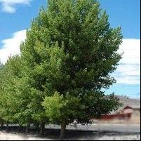 Cottonwood/ Siouxland
