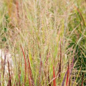 Switch Grass/ Heavy Metal