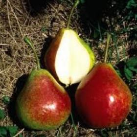 Pear/ Summercrisp